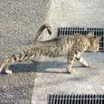 小春日和な猫 その4