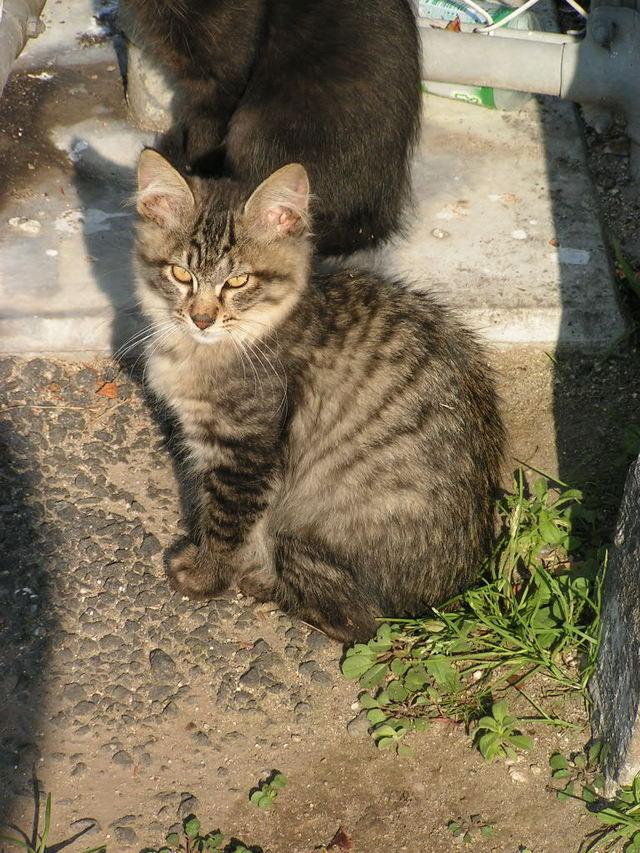 小春日和な猫 その3