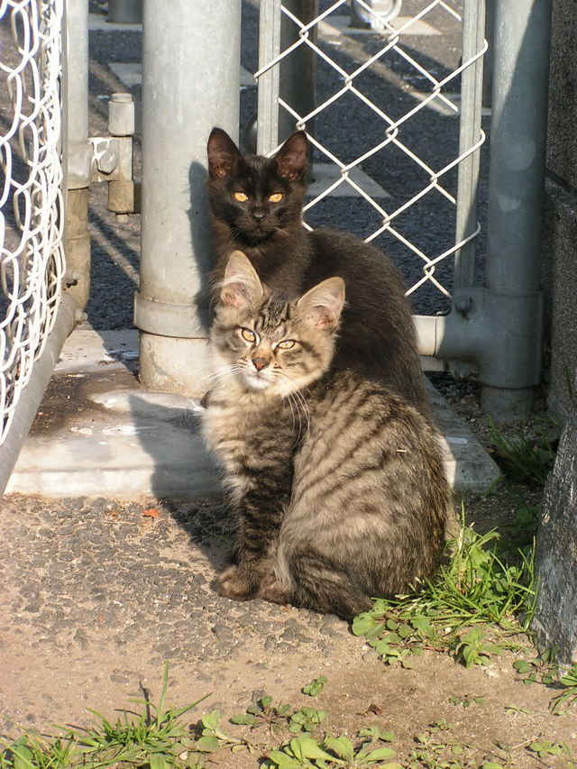 小春日和な猫 その2